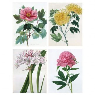 Botanical Illustrations Notecards