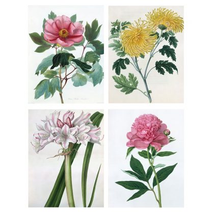 Botanical Illustrations Notecards
